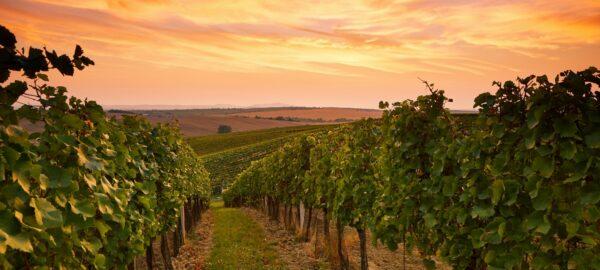 best Aussie wine regions